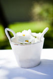 White daisy flowers in bucket Stock Images