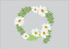 White daisy flowers with fern for frame or background. Illustration Stock Photography