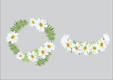 White daisy flowers with fern for frame or background. Illustration Stock Image