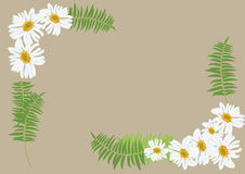 White daisy flowers with fern for frame or background. Illustration Stock Photos