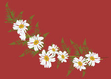White daisy flowers with fern for frame or background. Illustration Stock Photo