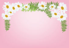 White daisy flowers with fern for frame or background vector. Illustration Royalty Free Stock Images