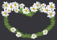 White daisy flowers with fern for frame or background vector. Illustration Royalty Free Stock Photos