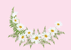 White daisy flowers with fern for frame or background vector. Illustration Royalty Free Stock Image