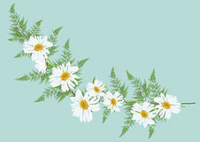 White daisy flowers with fern for frame or background vector. Illustration Stock Image