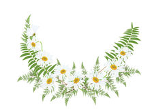 White daisy flowers with fern for frame or background vector. Illustration Royalty Free Stock Photo