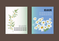 White daisy flowers with fern for frame or background vector. Illustration Stock Photography