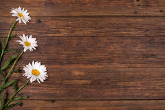 White daisy flowers on wooden background. Stock Images