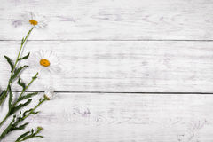White daisy flowers on  wooden table background. Royalty Free Stock Image