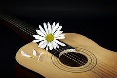 White daisy on guiary Stock Image