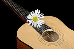 White daisy on guitar Royalty Free Stock Images