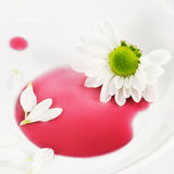 White daisy on the plate. Detail of white daisy with petals on the plate Royalty Free Stock Photography