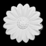 White daisy soap top view Stock Photo