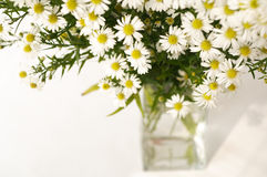 White daisy in a vase Royalty Free Stock Images