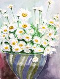 White daisy watercolors Royalty Free Stock Photography