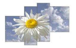 white daisy on a sunny day royalty free stock photo