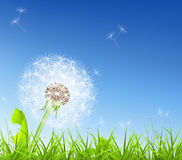 White Dandelion. Computer illustration of a high quality Royalty Free Stock Images