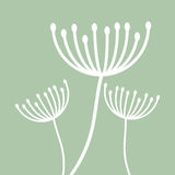 White Dandelion plant design Stock Images