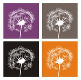 White dandelion silhouettes on colorful background. 4 white dandelion silhouette on different, colorful backgrounds. Indian summer icons Royalty Free Stock Photo