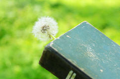 White dandelion and vintage book Stock Images