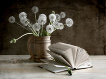 White dandelions Royalty Free Stock Image