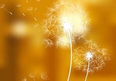 White dandelions on golden background - vector
