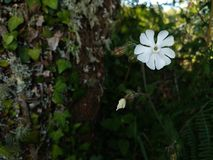 White and dark. A bright white flower in the vegetation royalty free stock photos