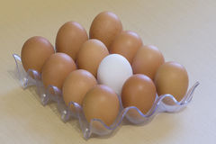 White and dark chicken eggs in a rack Royalty Free Stock Image