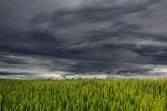 White and Dark Cloud over Green Grass Field Royalty Free Stock Images
