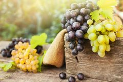 White and dark grapes on old surface. Fresh white and dark grapes on old surface stock images