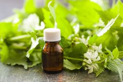 White dead nettle with aroma oil on old table. royalty free stock photos