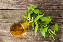 White dead nettle. And nettle tea stock photos