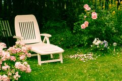 White deckchair in the garden among pink roses, romantic settings. Vintage style royalty free stock image