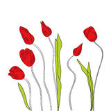 White decorative background with tulips Royalty Free Stock Photos