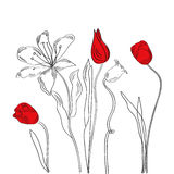 White decorative background with tulips and lily Royalty Free Stock Images