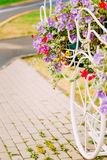 White Decorative Bicycle Parking In Garden. Decorative Vintage Model Of Old Bicycle Equipped With Basket Of Flowers. Toned photo. White Bike Parking With Flower Stock Photos