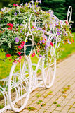 White Decorative Bicycle Parking In Garden. Decorative Vintage Model Of Old Bicycle Equipped With Basket Of Flowers. Toned photo. White Bike Parking With Flower Stock Image