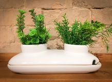 White decorative ceramic pot with two green plants Royalty Free Stock Image
