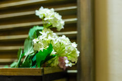 White decorative flowers at home Royalty Free Stock Images