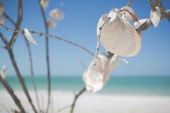 White Decorative Shells stock photo