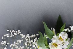 White bouquet flowers spring theme background stock image