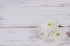 White delicate flowers with copy space. stock photography