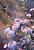 маленькие белые цветы stock photos