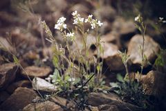 White delicate small flowers on long stems royalty free stock photos