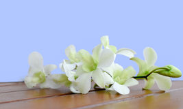 White Dendrobium Orchid. Orchid, Dendrobium white. Fresh cut flower on wooden table, blue background Stock Image