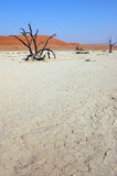 White Desert - Deadvlei Royalty Free Stock Photos