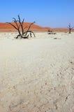 White Desert - Deadvlei Royalty Free Stock Photos