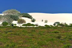 White Desert,Nambung National Park,South Western. Scenic view of vegetation in sandy white desert,near Nambung National Park,South Western Australia Stock Images