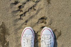White dirty sneakers with a red stripe on a sandy summer background. royalty free stock photography