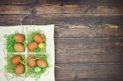 White dish with green grass and eggs and easter decor.  stock images